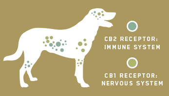 Charlotte's Web Pet - Dogs Endocannabinoid System